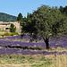 Contrastes de Provence par myrddinho - Le Barroux 84330 provence Provence France