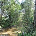 Petit ruisseau à la Roque Esclapon par SUZY.M 83 - La Roque Esclapon 83840 Var Provence France