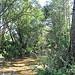 Petit ruisseau à la Roque Esclapon by SUZY.M 83 - La Roque Esclapon 83840 Var Provence France