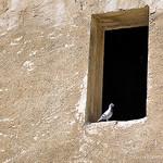 Le pigeon star : encadré ! par L_a_mer - Orange 84100 Vaucluse Provence France