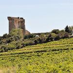 Vigne à Chateauneuf du Pape par  - Châteauneuf-du-Pape 84230 Vaucluse Provence France
