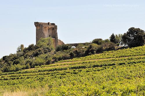 Vigne à Chateauneuf du Pape par L_a_mer