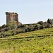 Vigne à Chateauneuf du Pape by L_a_mer - Châteauneuf-du-Pape 84230 Vaucluse Provence France