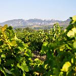 Les Dentelles et la vigne en fin d'été par Laurent2Couesbouc -   Vaucluse Provence France