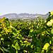 Les Dentelles et la vigne en fin d'été by Laurent2Couesbouc - Digne les Bains 04000 Vaucluse Provence France