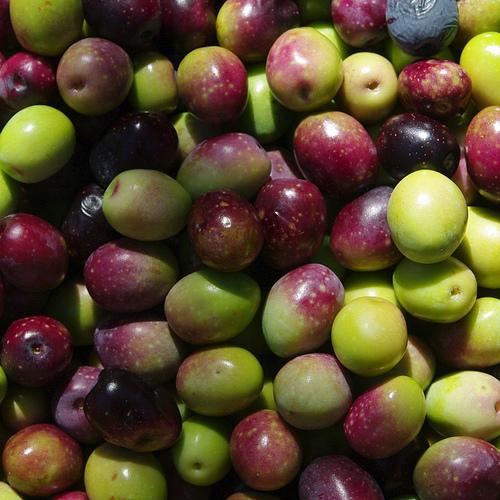 Récolte d'olives par genevieveromier