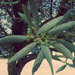 Branche d'olivier par anitaagrenouille -   provence Provence France