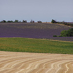 Jeux de couleurs provençal par Locations Moustiers - Valensole 04210 Alpes-de-Haute-Provence Provence France
