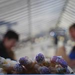 Pointes d'asperges au marché par S. E. P. - Nice 06000 Alpes-Maritimes Provence France
