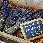 Bouquet de Lavande - Avignon Lavender by  - Avignon 84000 Vaucluse Provence France