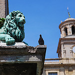 Lazy lion and the brave pigeon by 6835 - Arles 13200 Bouches-du-Rhône Provence France