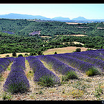 Relief de provence by  - Puimichel 04700 Alpes-de-Haute-Provence Provence France