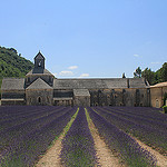 Abbaye de Snanque et son champs de lavande by  - Gordes 84220 Vaucluse Provence France