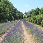Abbaye de Sénanque et sa lavande par Jen.Cz - Gordes 84220 Vaucluse Provence France