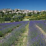 Village de Saignon camouflé dans la roche par Christopher Swan - Saignon 84400 Vaucluse Provence France