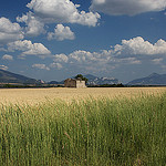Plateau de Valensole par Christopher Swan - Valensole 04210 Alpes-de-Haute-Provence Provence France