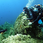 Grouper - Scuba diving at Pointe du Vaisseau, Port Cros by chris wright - hull - Port Cros 83400 Var Provence France