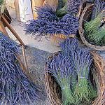 Sault : bouquet de lavande séchée par __Olivier__ - Sault 84390 Vaucluse Provence France