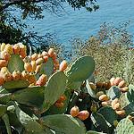Jardin du Rayol par  - Rayol Canadel sur Mer 83820 Var Provence France