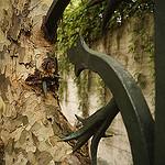 Le platane s'adapte ! by Karschti - Avignon 84000 Vaucluse Provence France