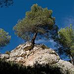 Randonnée dans les sentiers de la Sainte-Victoire by jenrif -   provence Provence France
