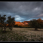 Oliviers des Alpilles by  - St. Aygulf  Bouches-du-Rh&ocirc;ne Provence France
