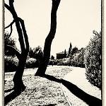 Chez Paul Cézanne en mode graphique N&B par pierre.arnoldi - Aix-en-Provence 13100 Bouches-du-Rhône Provence France