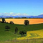 Les couleurs de Valensole par J.P brindejonc - Valensole 04210 Alpes-de-Haute-Provence Provence France