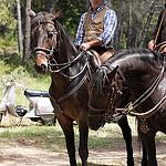 Transhumance rider - tradition by PDGalvin - La Bouilladisse 13720 Bouches-du-Rhône Provence France