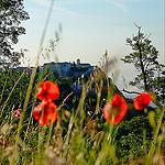 Gourdon dominant ses coquelicots par Andrey Tonnelier - Gourdon 06620 Alpes-Maritimes Provence France