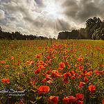 Poppy's Battlefield by Sébastien Sirvent Photographie - Gassin 83580 Var Provence France