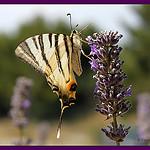 La Fleur et le Papillon par Vero7506 -   Var Provence France