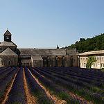Abbaye Notre-Dame de Sénanque et sa lavande bien ordonnée par Guarda Nuvole - Gordes 84220 Vaucluse Provence France