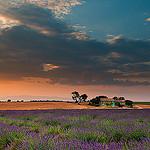 Valensole et ses couleurs de Provence par Tony N. - Valensole 04210 Alpes-de-Haute-Provence Provence France
