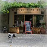 Vignoble Paul Dubrule by Ann McLeod Images - Lourmarin 84160 Vaucluse Provence France
