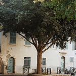 Ambiance à Hyères by Petrana Sekula - Hyères 83400 Var Provence France