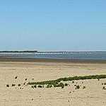 Etang des Launes en Camargue par pizzichiniclaudio - Saintes Maries de la Mer 13460 Bouches-du-Rhône Provence France